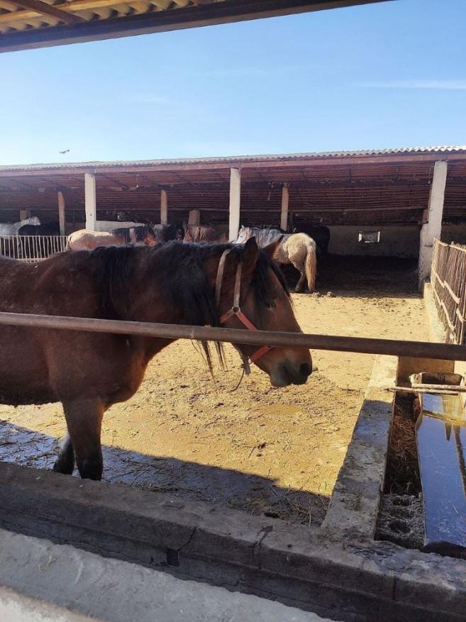 Скотоводческая ферма 4 га. Зангиатинский район, Хасанбой.
